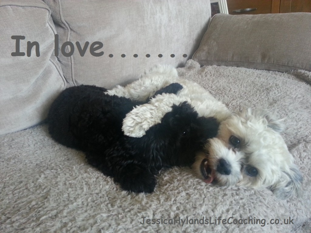 dog-love-Jessica-Hylands-Confidence-Coaching